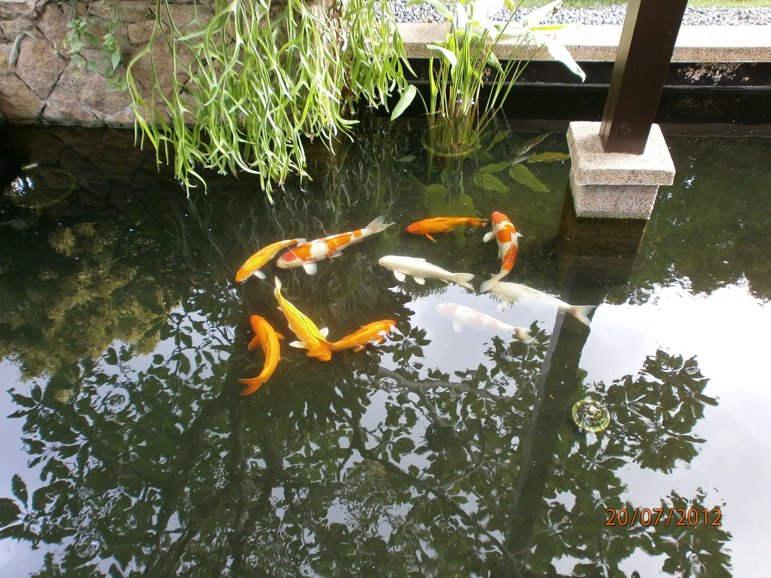 Pond cleaning for Fish pond maintenance